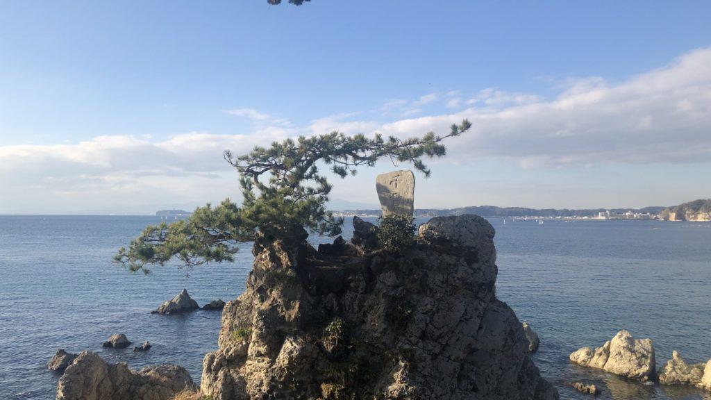 森戸神社ご神木