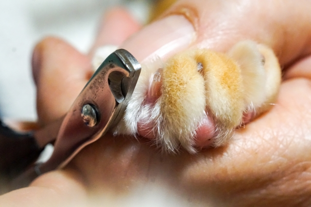 猫 爪切り