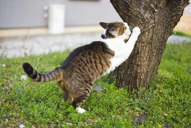 木 爪とぎ 猫
