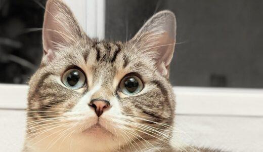 猫の毛が服に付く!付きにくくする対策と軽減する方法