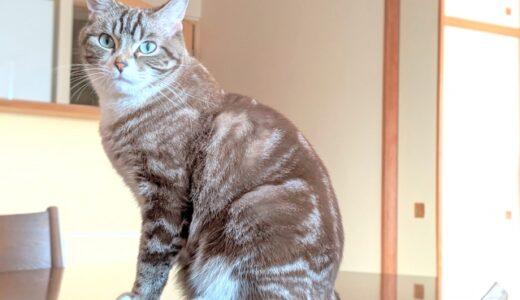 猫ちゃんがなつかない!威嚇してきたり、逃げたりする理由は?